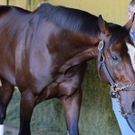 Tonalist Jockey Club Gold Cup 2014