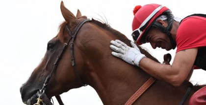 Breeders' Cup 2014 Picks and Plays