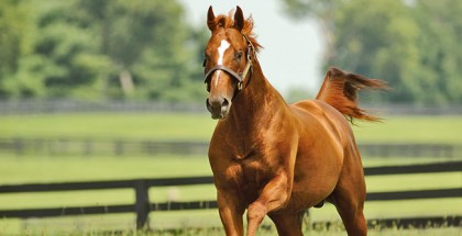 Stallion Feature Curlin