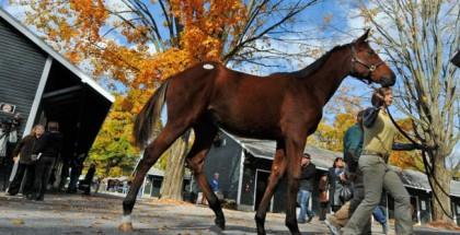 Saratoga Fall Mixed and Hora Sale
