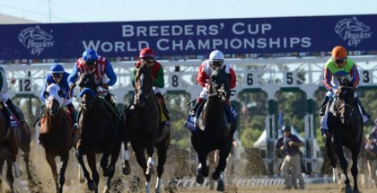 Breeders' Cup 2014 Five Horses to Watch