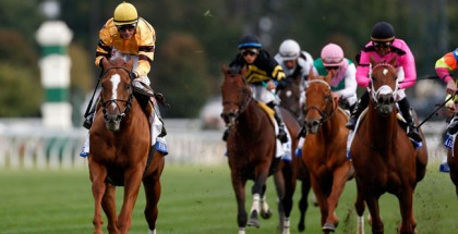 Wise Dan Shadwell Turf Mile 2014