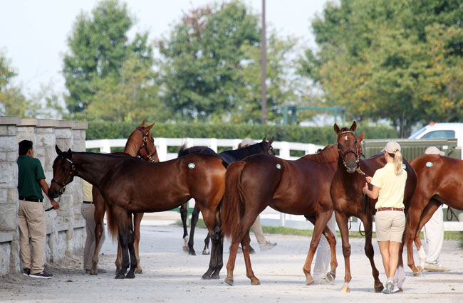 Keeneland November Sales 2014 Book Two Selections
