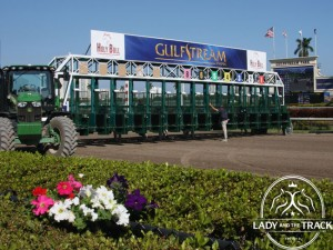 Holy Bull Stakes 2015 at Gulfstream Park