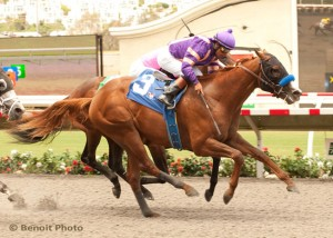 Kentucky Derby 2015 contender Lord Nelson