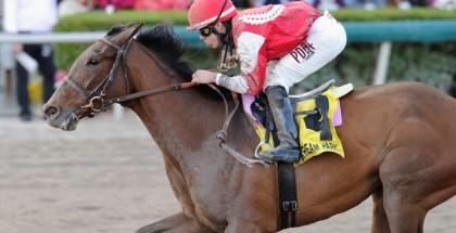 Birdatthewire Horse