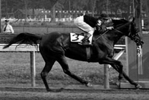 Busanda Stakes 2015