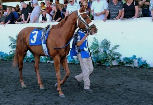 Metaboss Horse