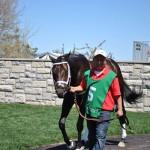 Protonico Horse