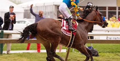 American Pharoah Preakness Triple Crown 2015
