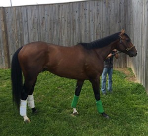 Tale of Verve Preakness 2015