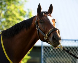Tonalist Met Mile 2015 Belmont