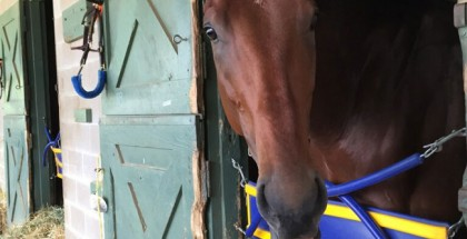American Pharoah Triple Crown 2015