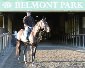 Cozmic One Belmont