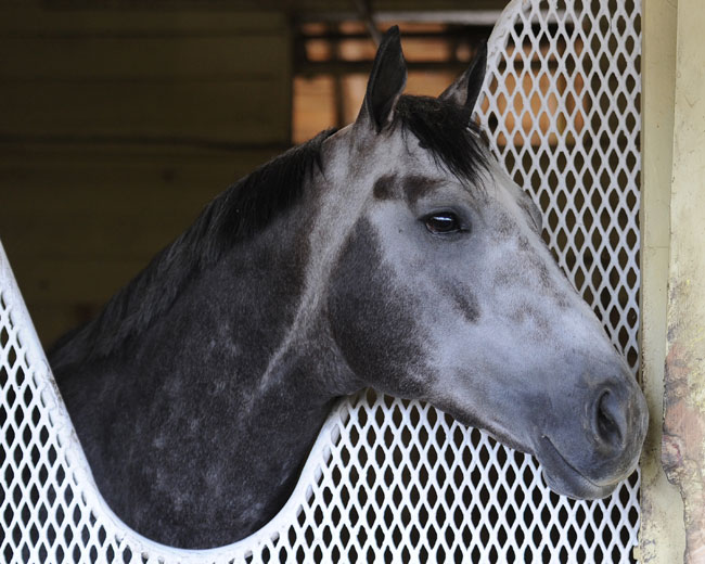Frosted Saratoga
