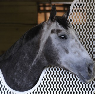 Frosted Confirmed For Classic One Day after Wrong-Way Work