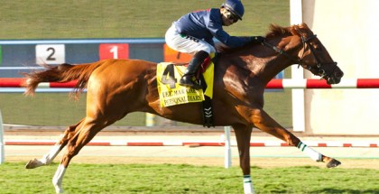 Canadian Stakes Personal Diary 2015
