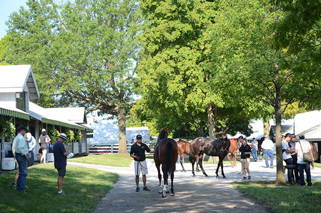 Keeneland September Yearling Sale 2015 Overview