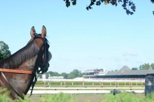 Saratoga Woodward Stakes 2015