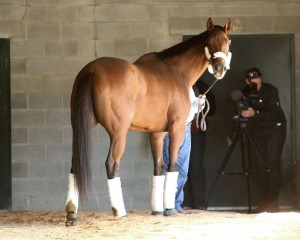 Beholder Declared from Breeders' Cup