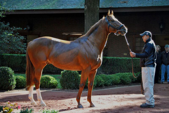 Hill N Dale Farms Stands Most Breeders Cup Winners