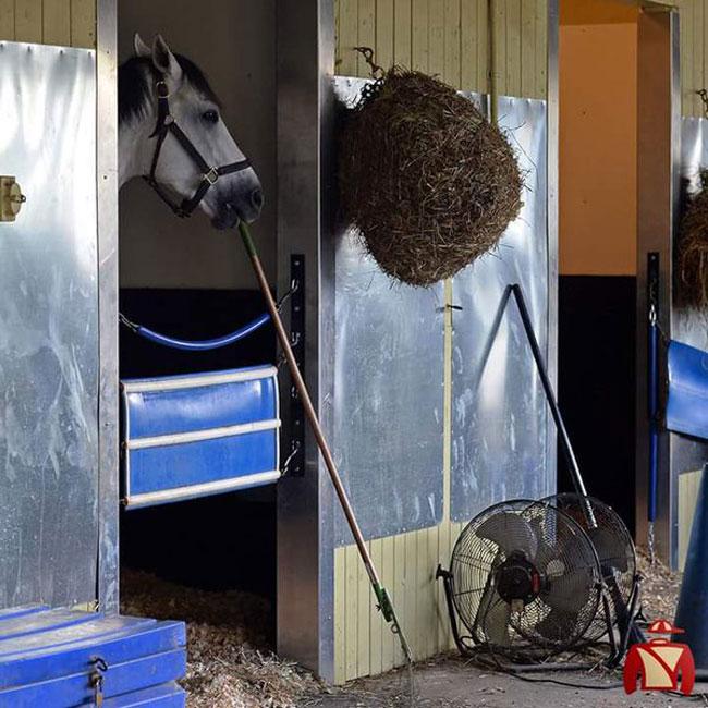 Juba Sweeps Barn Floor