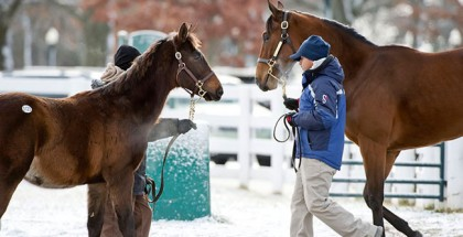 Keeneland January Sale