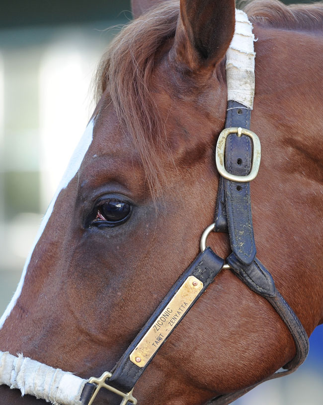 Ziconic Gives Zenyatta Fans New Hope Lady And The Track