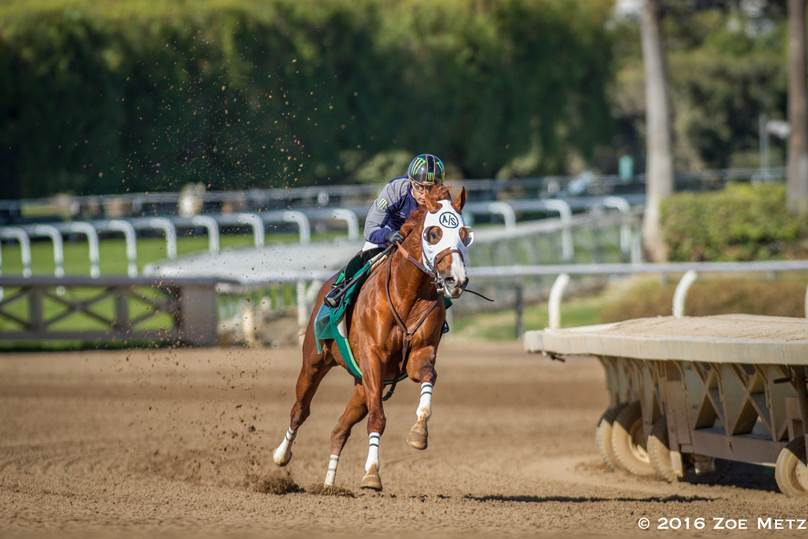 California Chrome Drills Six Fast Furlongs With Victor