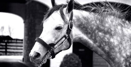 Race Day Horse Spendthrift