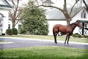 Wicked Strong Spendthrift