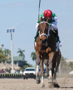 Cathryn Sophia horse