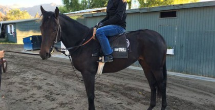 Donworth Horse
