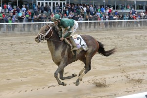 Greenpointcrusader Horse