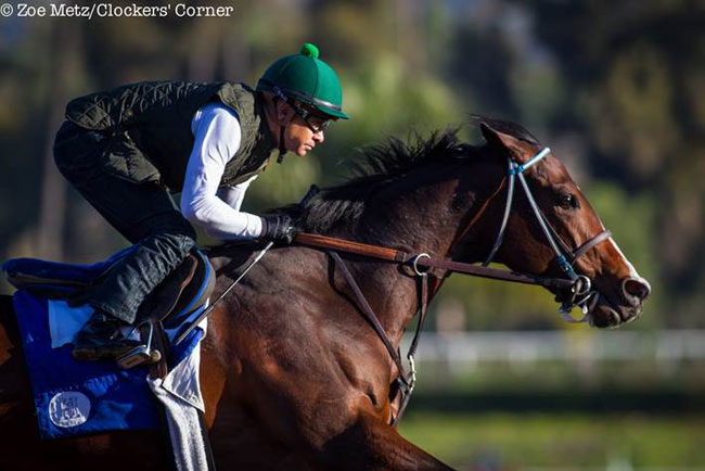 Songbird Flies Into Santa Ysabel Lady And The Track