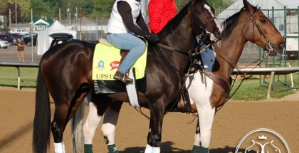Upstart Horse