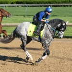 Creator Horse Kentucky Derby 2016