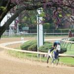Mohaymen Horse Kentucky Derby 2016