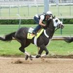 Tom's Ready Horse Kentucky Derby 2016