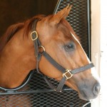 Whitmore Horse Kentucky Derby 2016