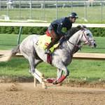 Lani Horse Kentucky Derby 2016