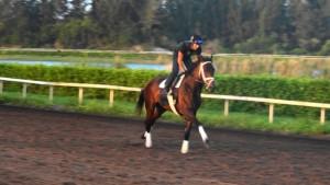 Outwork Horse Kentucky Derby