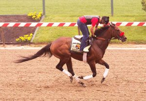 2016 Preakness Horses