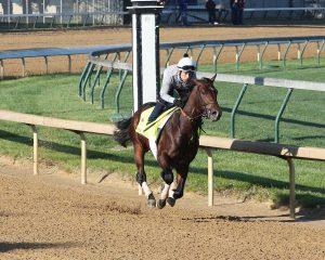 Shagaf Horse Kentucky Derby 2016