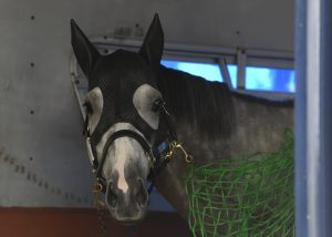 2016 Preakness Stakes Horses