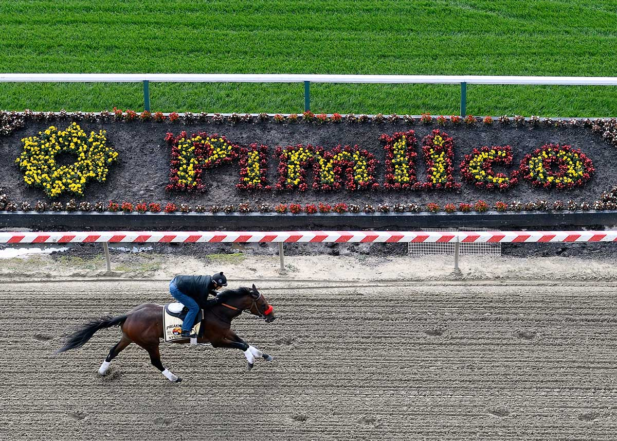 Preakness 2016 Pimlico Not Tight Turned Speed Favoring