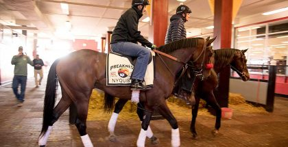 Preakness Stakes Odds 2016