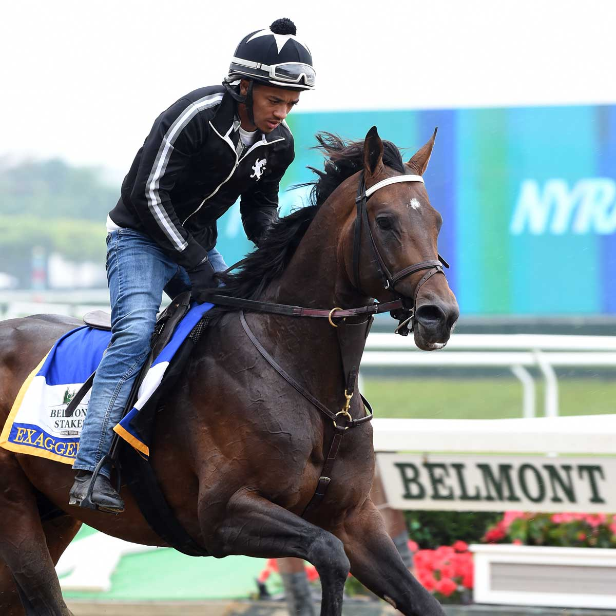 2016 Belmont Stakes Horses And Possible Contenders