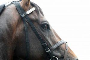 Exaggerator Belmont Stakes 2016