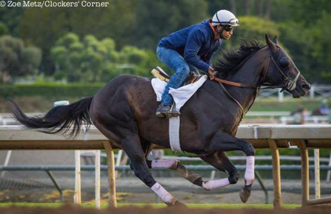 Bal A Bali Makes Dirt Debut In Gold Cup At Santa Anita
